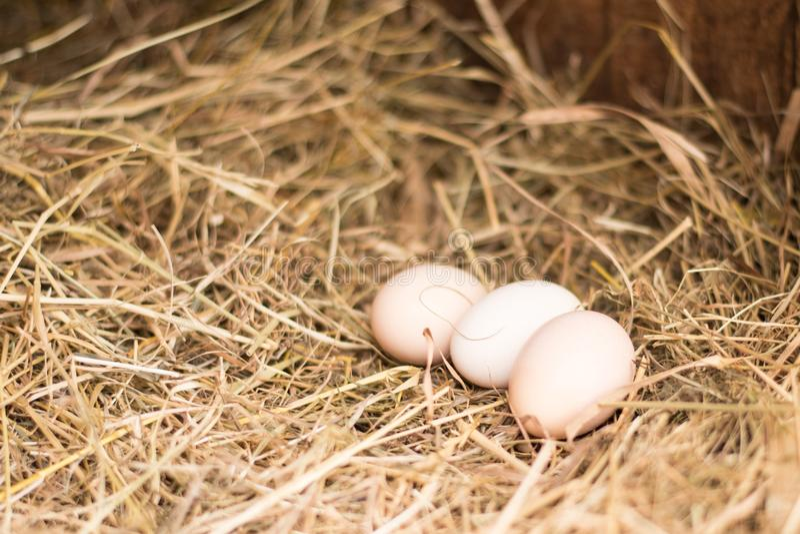 De verse Eieren van de Kip royalty-vrije stock foto's