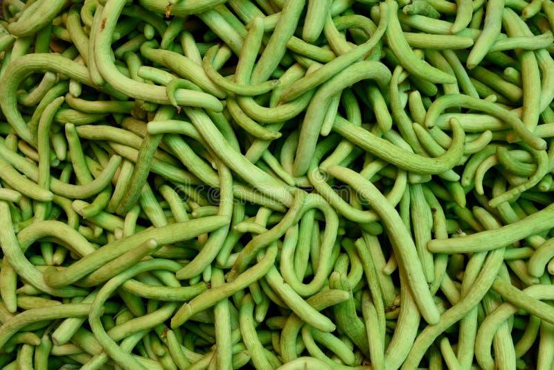 De verse geoogste ruwe Armeense Komkommers of Kakdi, in lokale landbouwers veroorzaken markt stock foto's