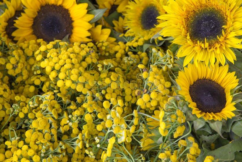 De verse geplukte bloemen van het bloemlandbouwbedrijf stock afbeeldingen