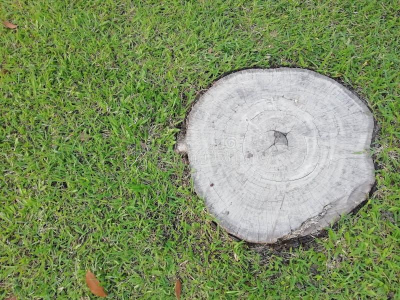 De verse grassen hebben een oude boomstomp stock fotografie