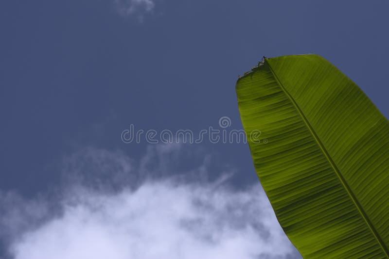 De verse groene blauwe bewolkte hemel van het banaanblad stock afbeelding