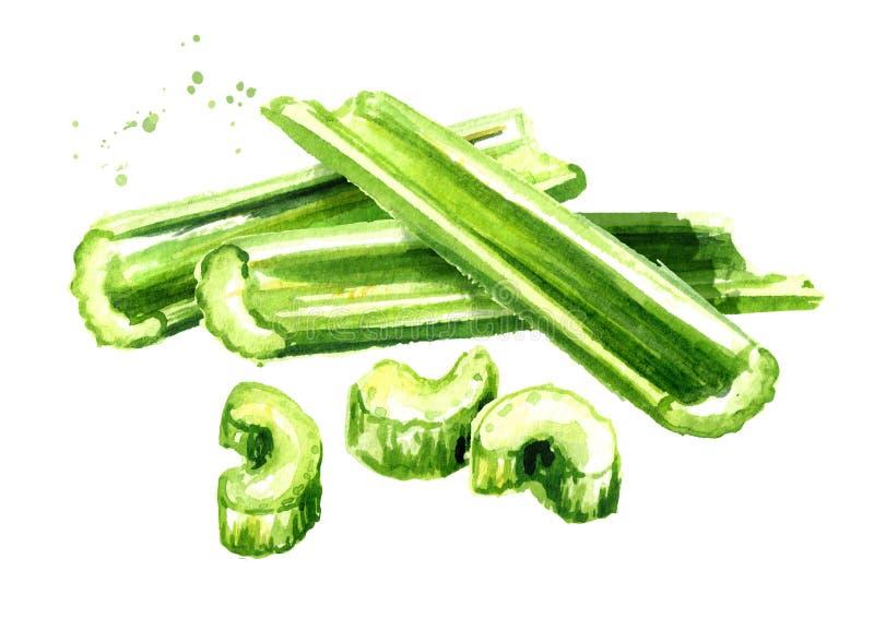 De verse groene bos van de selderiesteel Waterverfhand getrokken die illustratie op witte achtergrond wordt geïsoleerd royalty-vrije illustratie