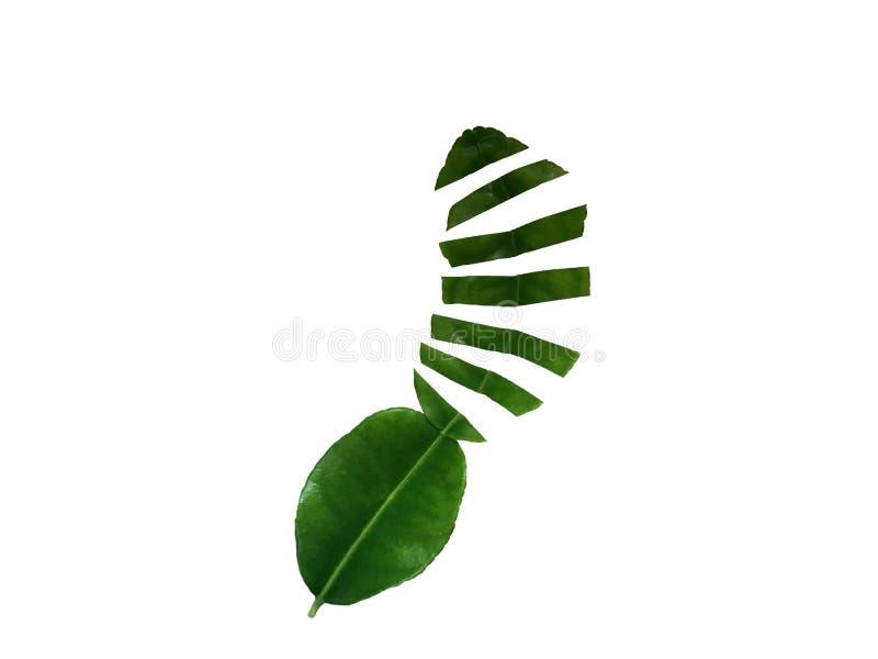 De verse groene die plak van het bergamotblad op witte achtergrond wordt geïsoleerd stock fotografie