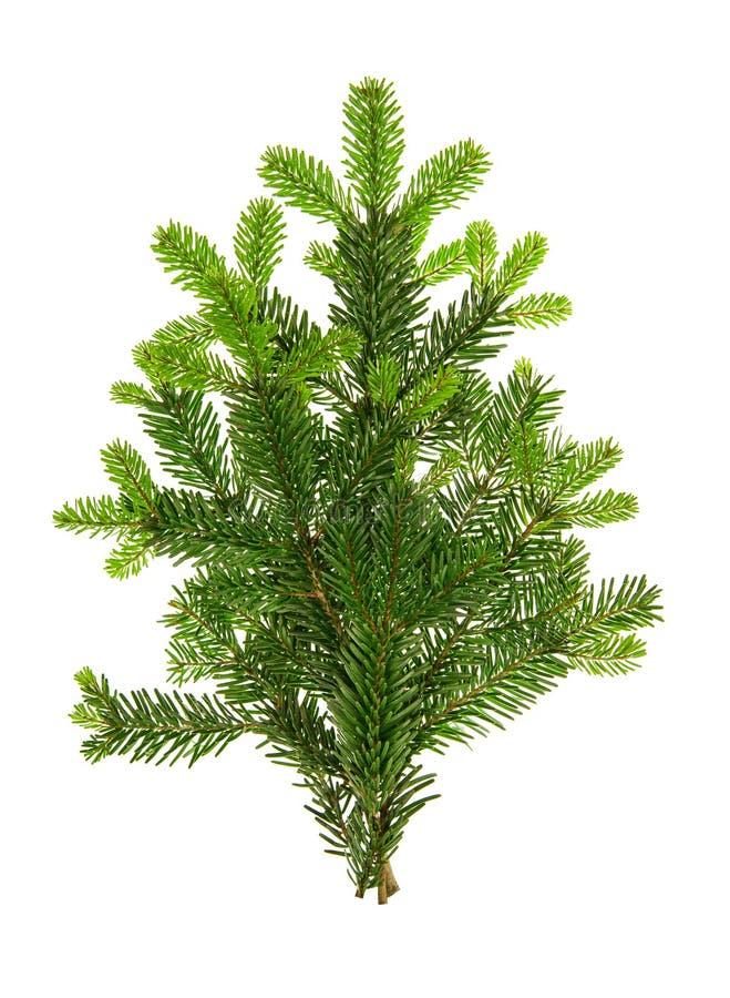 De verse groene spar vertakt zich Kerstboom witte achtergrond stock afbeelding