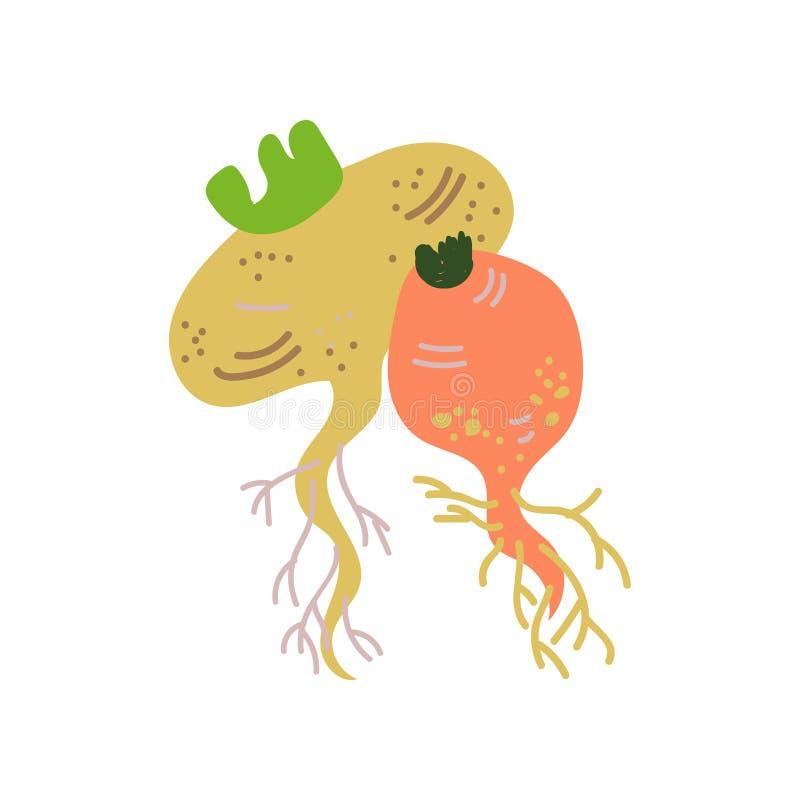De Verse Groente van raapverscheidenheden, Organisch Voedzaam Vegetarisch Voedsel voor Gezonde voeding Vectorillustratie stock illustratie