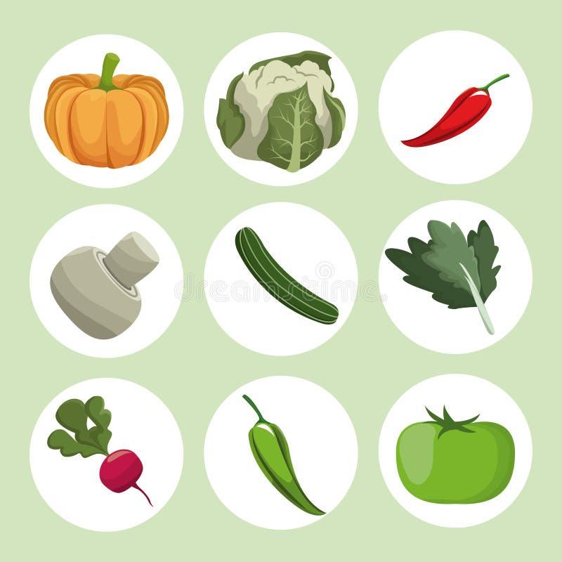 De verse ingrediënten van inzamelingsgroenten stock illustratie
