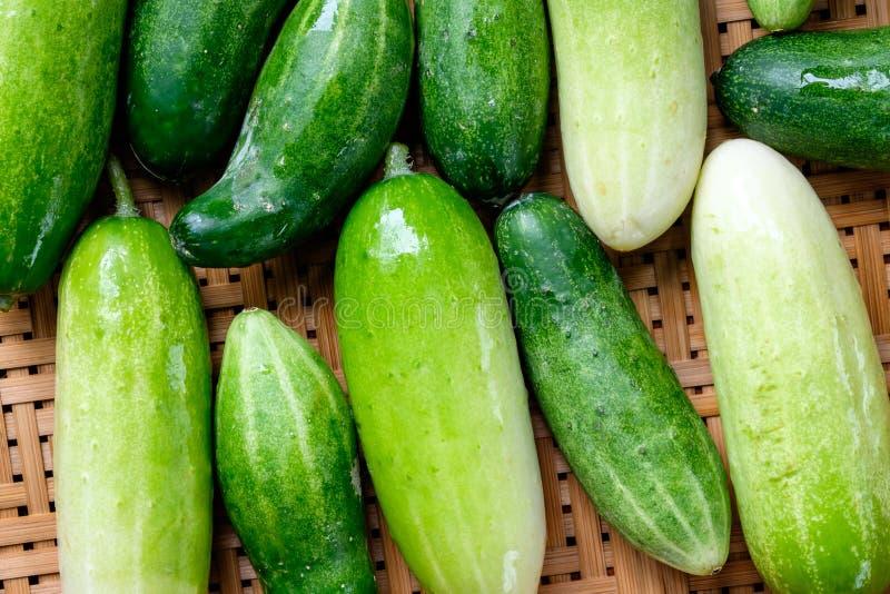 De verse komkommers van de Throatedlijster royalty-vrije stock foto