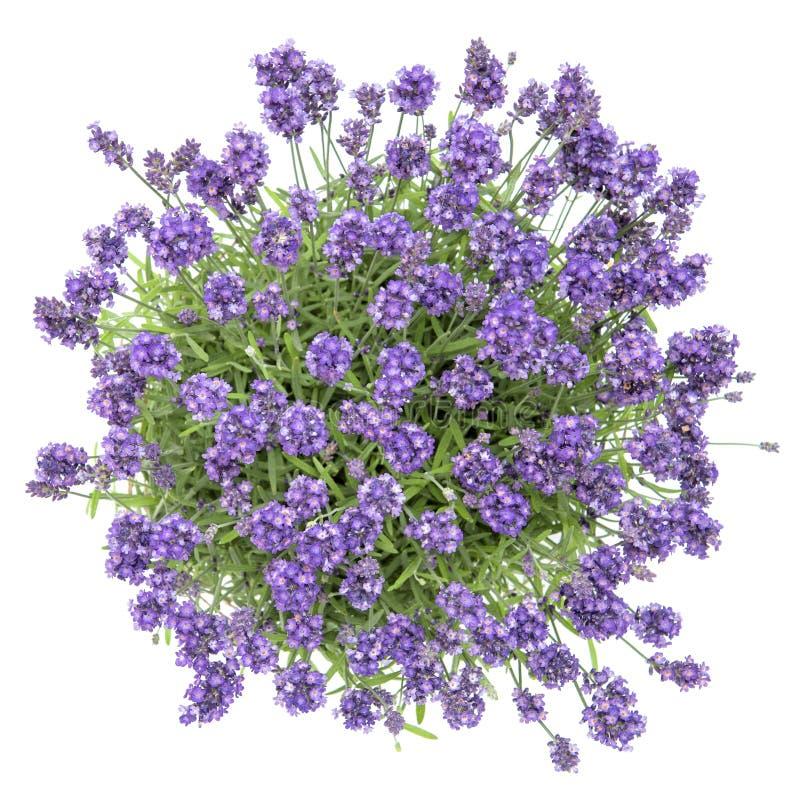 De verse lavendel bloeit boeket witte Hoogste mening als achtergrond royalty-vrije stock afbeelding