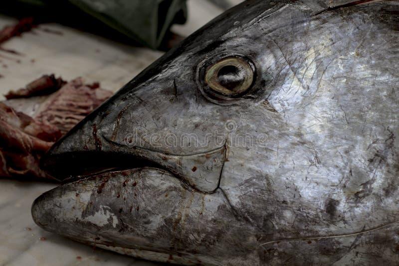 De verse markt van tonijn hoofdvissen stock foto