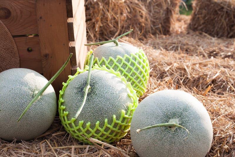 De verse meloenen op klaar stro gaan naar landbouwersmarkt Gezond stock foto