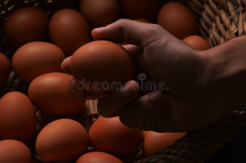 De verse organische kippeneieren in een rieten mand en een mannetje overhandigen het houden van een ei royalty-vrije stock foto's