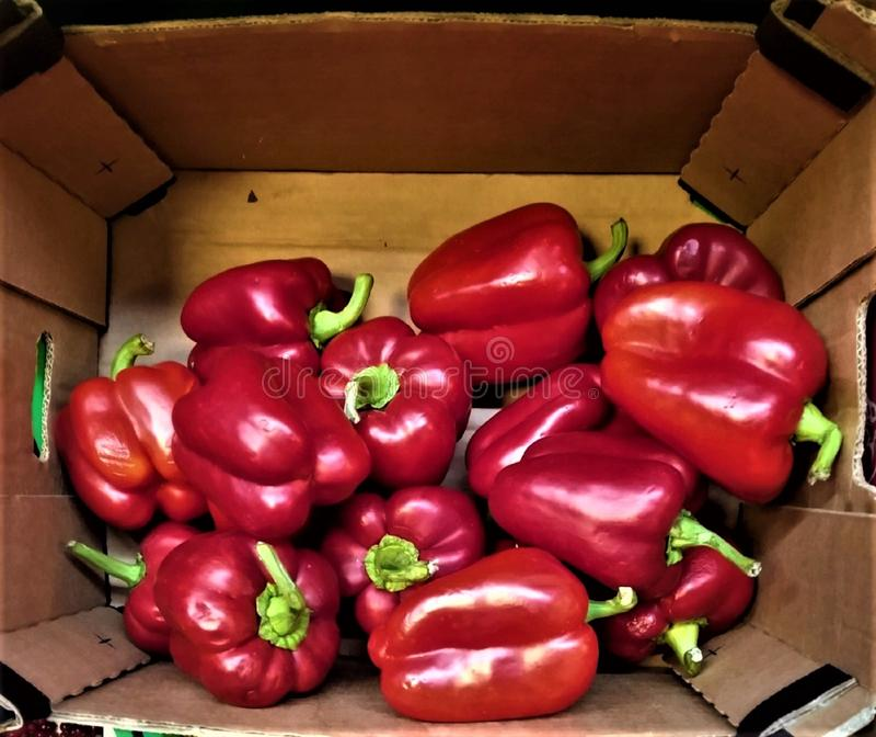 de verse paprika van rode kleur is vitamine-rijk, een gezond ontbijt, regetarianets, stock afbeelding