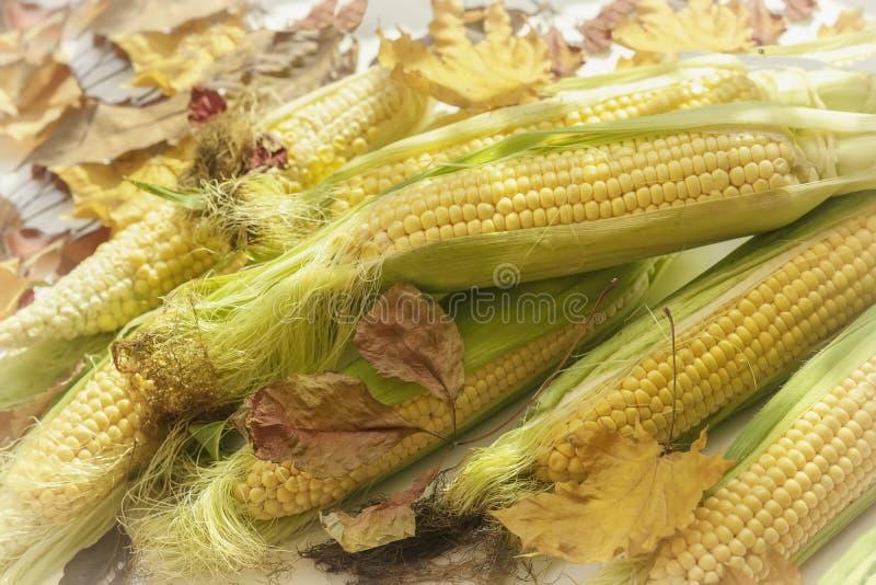 De verse rijpe gele suikermaïsmaïskolven op lijst met met de droge herfst gaat weg royalty-vrije stock afbeelding