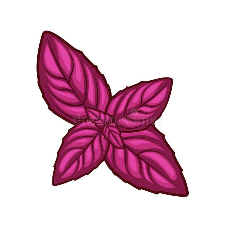 De verse rode die bladeren van het basilicumkruid op witte achtergrond worden geïsoleerd stock afbeelding