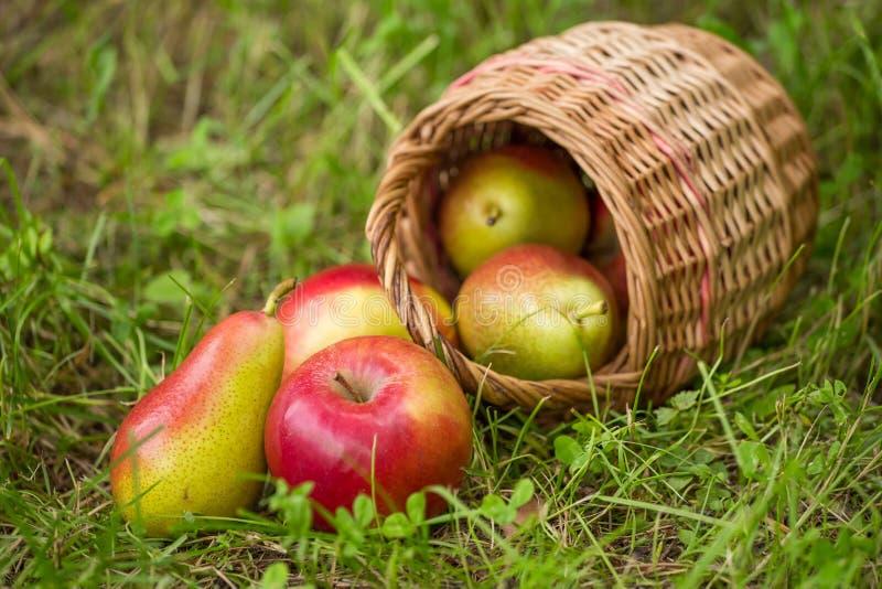 De verse rode groene appelen en de peren in een rieten mand verspreidden zich in groen gras op aard achtergrondclose-up stock afbeeldingen