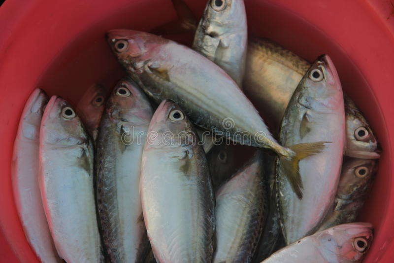 De Verse vissen in de de zeevruchtenmarkt van SHENZHEN SHEKOU stock afbeelding
