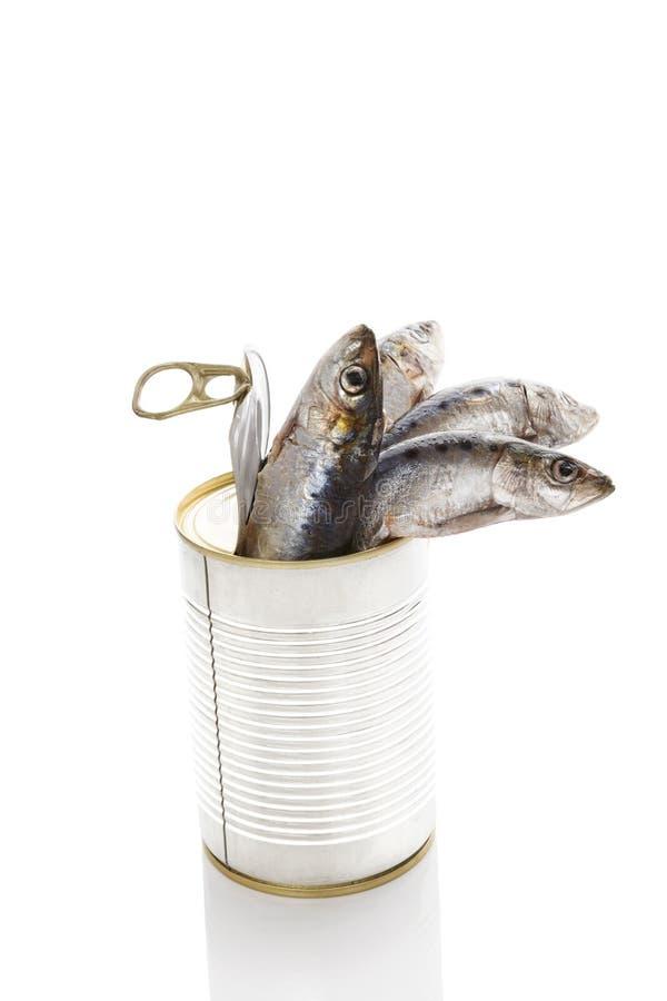 De verse vissen kunnen binnen op witte achtergrond stock afbeelding
