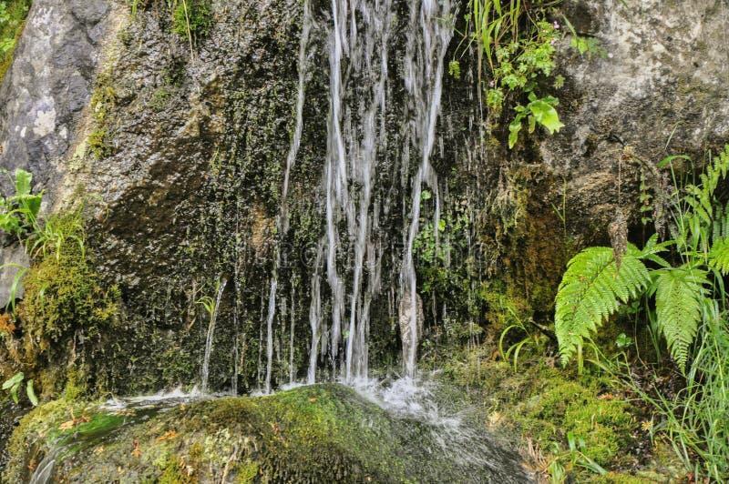 De de verse waterval en varen van de boomwildernis royalty-vrije stock foto's