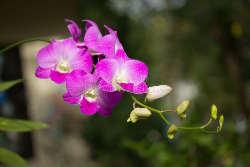 De verse Witte bloem van de mengelings Roze orchidee stock afbeeldingen