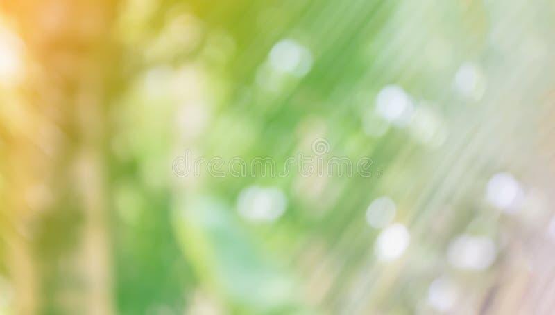 De verse zachte van de de kokosnotenstruik van de aard groene kleur bokeh boom en sunli stock afbeeldingen