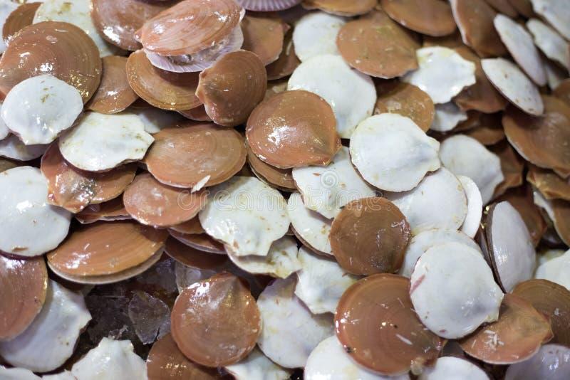 De verse Zeevruchten van Tweekleppige schelpdierenschaaldieren de Verse markt royalty-vrije stock foto's