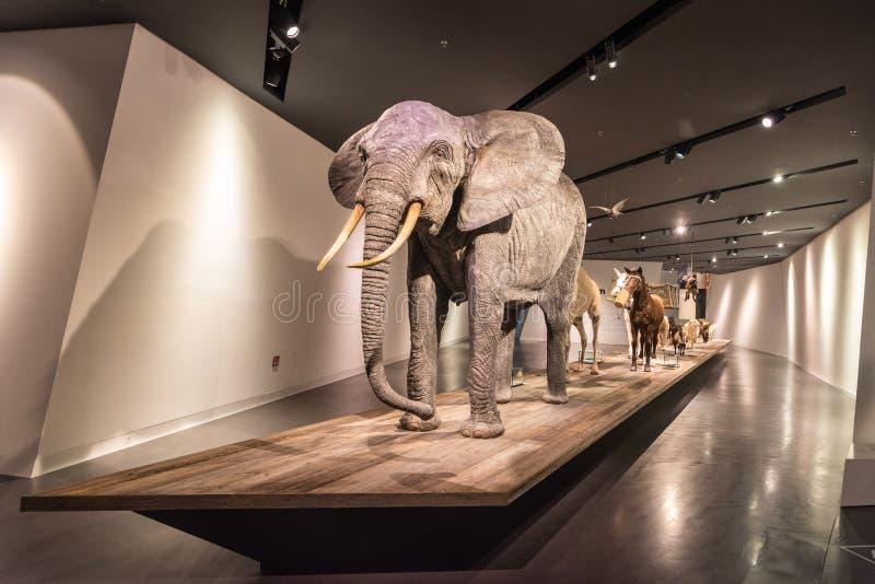 De vertoning als thema had op gebruik van dieren in de militairen bij Militair Geschiedenismuseum in Dresden royalty-vrije stock afbeeldingen