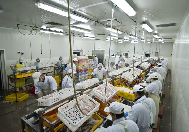 De verwerkingsfabriek van vissen stock foto's