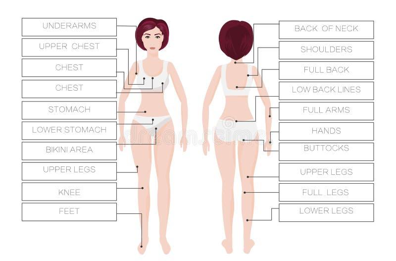 De verwijderings vrouwelijke streken van het laserhaar De vrouw van het gebiedslichaam IPL procedure royalty-vrije illustratie