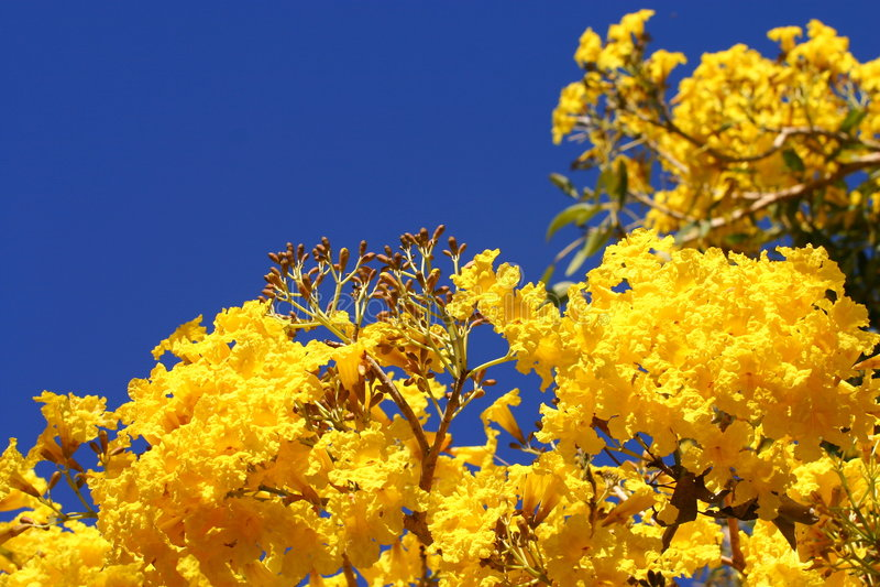 De verwrongene bloemen van de Wilg stock afbeeldingen