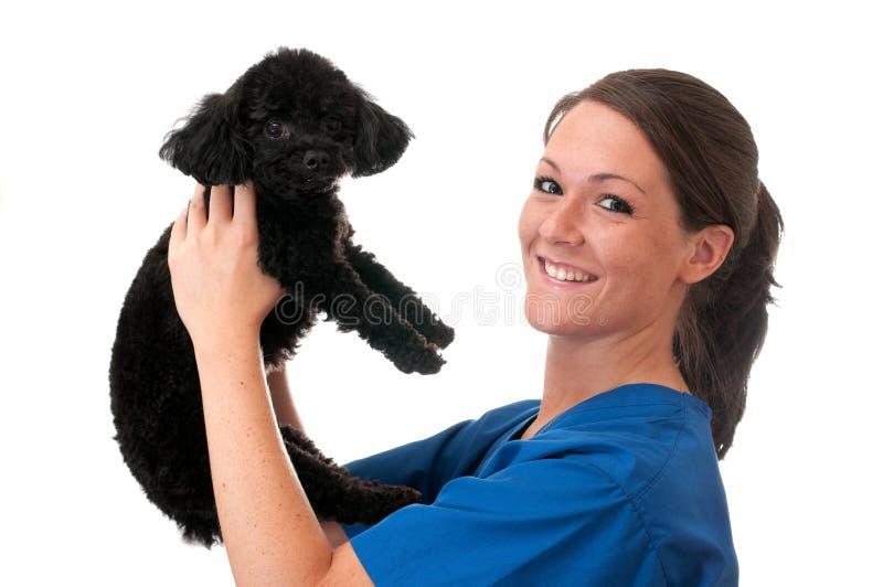 De veterinaire Hulp Geïsoleerde0 Hond van het Huisdier van de Holding stock foto's