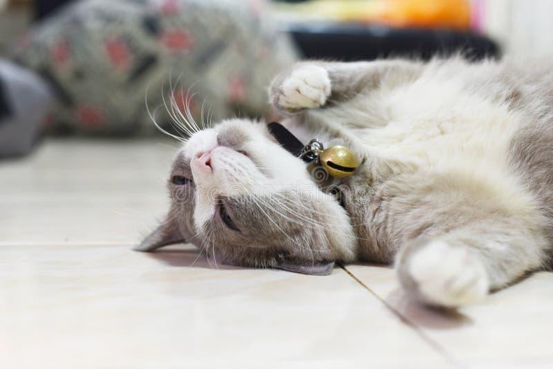 De vettige grijze kat slaapt op de vloer royalty-vrije stock fotografie
