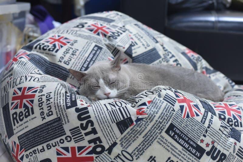 De vettige grijze kat slaapt op zakboon royalty-vrije stock foto
