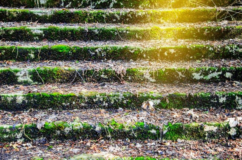 de vieilles étapes envahies avec de la mousse verte sont couvertes de leav tombé images libres de droits