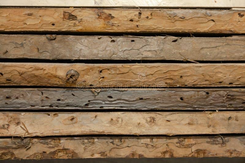 De vieux conseils a été mangés par le ver de bois image stock