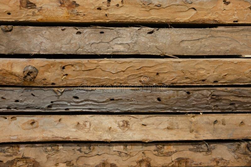 De vieux conseils a été mangés par le ver de bois photographie stock libre de droits