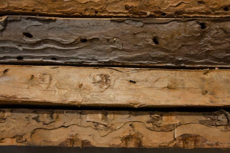 De vieux conseils a été mangés par le ver de bois photo libre de droits