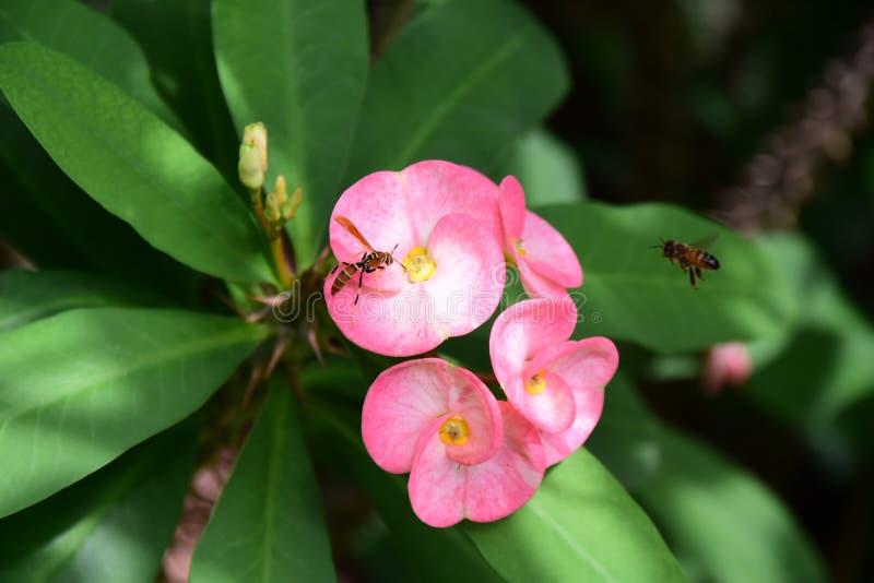 De vijand valt binnen en regel, de bijenhorloges royalty-vrije stock afbeeldingen