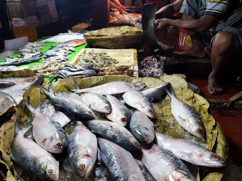 De vijf-vlek Haring, Hilsa ilisha van de elfttenualosa van Kelee vist op ijs voor verkoop in vissenmarkt met zilverachtige schaal royalty-vrije stock foto's