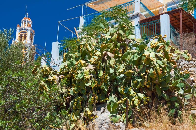 De Vijgencactus van de fruitcactus stock afbeelding