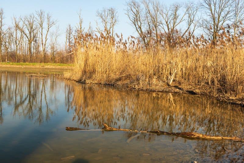 De vijver met stormlopen en bomen overdacht watergrond in de vroege lente CHKO Poodri in Tsjechische republiek stock afbeelding