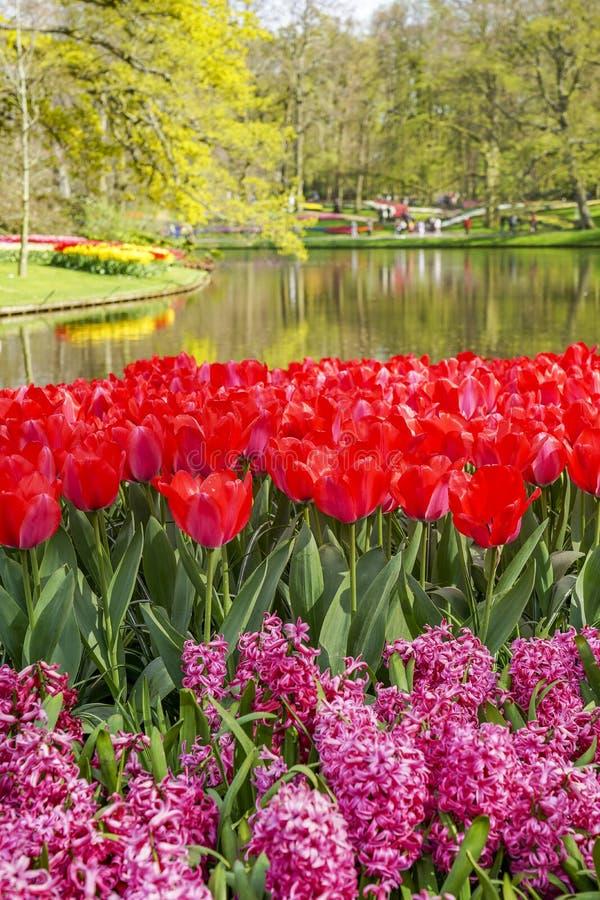 De vijver van het bloempark met rode tulpen en roze hyacinten in de voorgrond royalty-vrije stock afbeeldingen