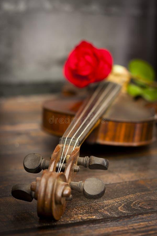 De viool en rood nam toe stock foto