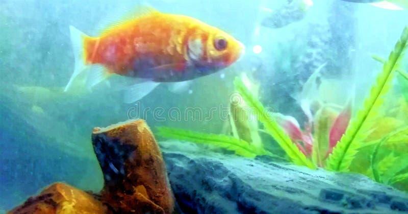 De vis wordt verloren en alleen stock afbeeldingen
