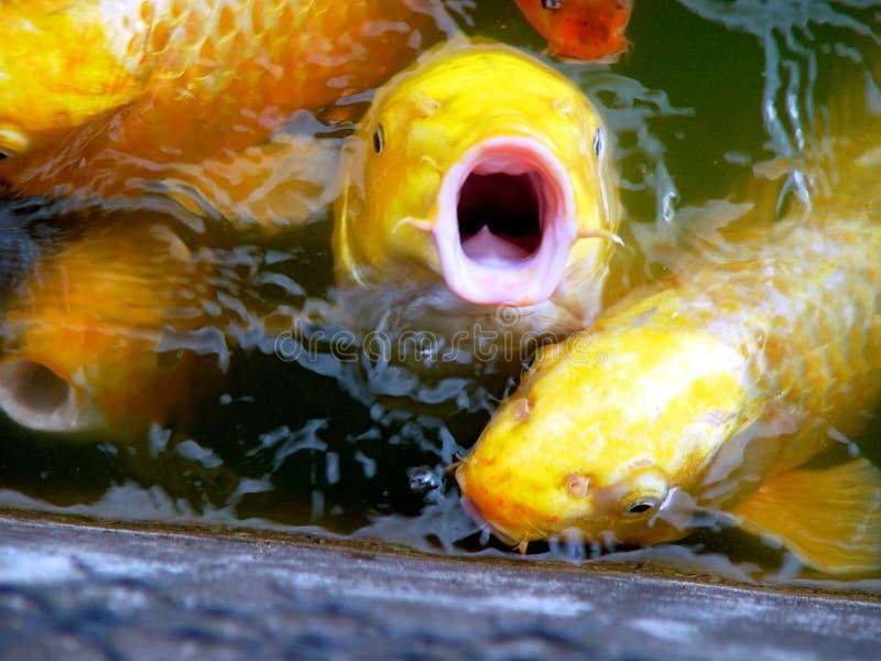 De vis zegt nr royalty-vrije stock afbeeldingen