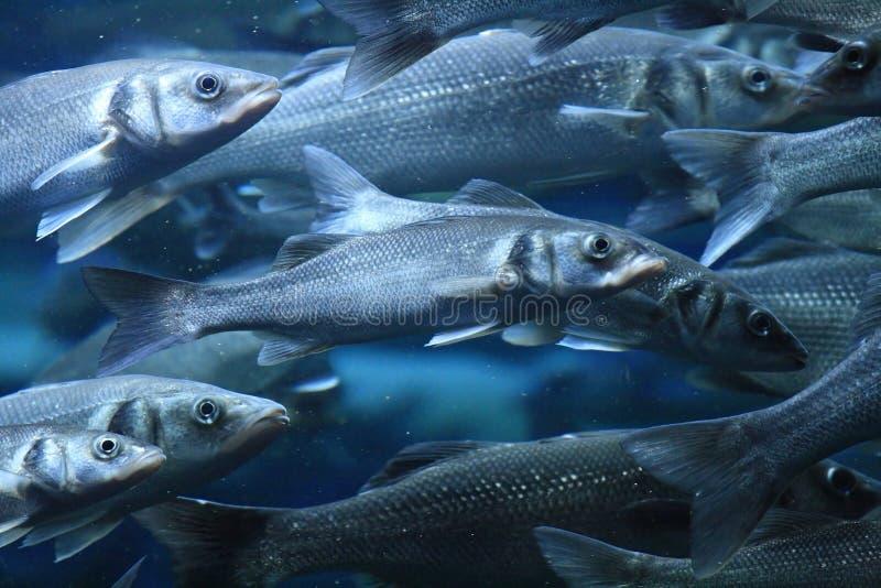 De vissen royalty-vrije stock afbeelding