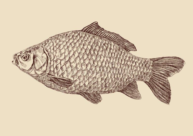 De vissen die van de karper vectorillustratie trekken vector illustratie