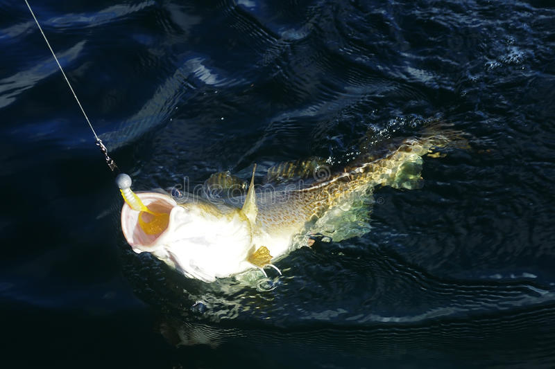 De vissen van de kabeljauw royalty-vrije stock afbeeldingen