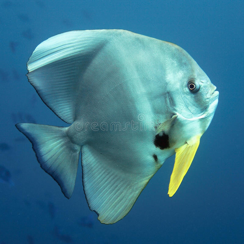 Download De vissen van de knuppel stock afbeelding. Afbeelding bestaande uit warm - 10120001
