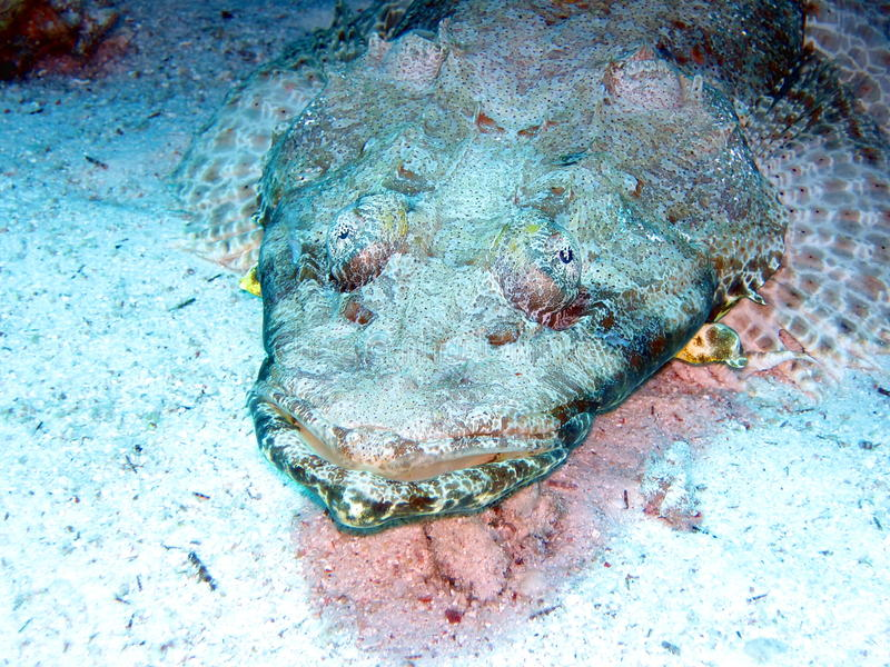 De vissen van de krokodil royalty-vrije stock afbeelding