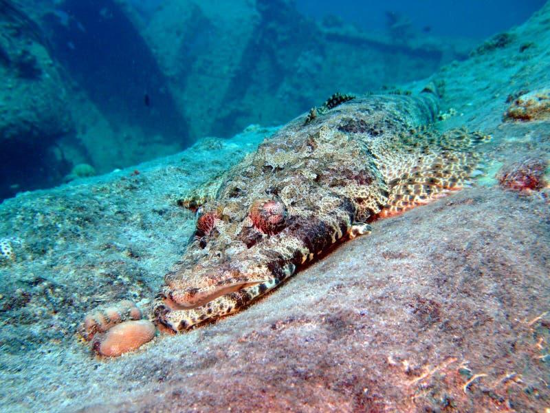 De Vissen van de krokodil royalty-vrije stock foto